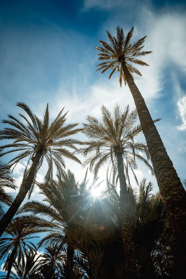 photographie-nature-tozeur-sud-tunisien-tunisie-oasis